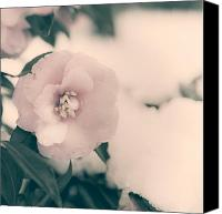 Theaceae Canvas Prints - Camellia Canvas Print by Joana Kruse