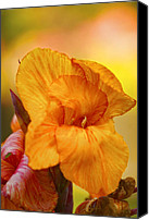 Canna Canvas Prints - Canna Canvas Print by Diana Cox