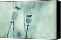 Teal Flowers Canvas Prints - Capsule Series Canvas Print by Priska Wettstein
