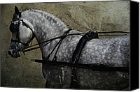 Wild Stallion Canvas Prints - Cart Horse  Canvas Print by Lyndsey Warren