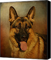 Alsatian Canvas Prints - Chance Canvas Print by Sandy Keeton
