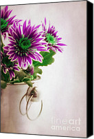 Purple Floral Canvas Prints - Chrysanthemums Canvas Print by Kristin Kreet