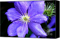 Vine Canvas Prints - Climbing Clematis Canvas Print by Julie Palencia