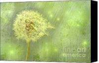 Blossom Canvas Prints - Closeup of dandelion with seeds Canvas Print by Sandra Cunningham
