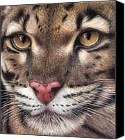 Colored Pencil Canvas Prints - Clouded Leopard Canvas Print by Pat Erickson