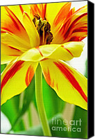 "\""macro Photography\\\"" Canvas Prints - Color Canvas Print by Kristin Kreet"