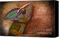 Reptiles Mixed Media Canvas Prints - Colored Canvas Print by Angela Doelling AD DESIGN Photo and PhotoArt