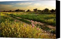 Wheat Canvas Prints - Countryside Landscape Canvas Print by Carlos Caetano