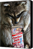 Raccoon Digital Art Canvas Prints - Cracker Jack Canvas Print by Paulette  Thomas