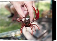 Crawfish Canvas Prints - Crawfish Canvas Print by Jim DeLillo
