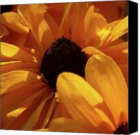 Thimbleweed Canvas Prints - Cutleaf Tiger eye Canvas Print by Jouko Lehto