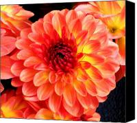 Northwest Art Photo Canvas Prints - Dahlias Canvas Print by Cathie Tyler