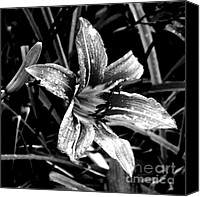 Day Lily Flowers Canvas Prints - Day Lily in Black and White Canvas Print by Sarah Loft
