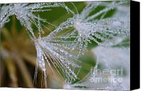 Dewy Canvas Prints - Dewdrop Designs Canvas Print by Crystal Garner