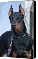 Dobermann Canvas Prints - Doberman Pinscher  Canvas Print by Amir Paz