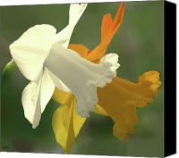 Lovely Looking Flower Mixed Media Canvas Prints - Duration Daffodil  Canvas Print by Debra     Vatalaro