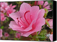 Garden Special Promotions - Eager Canvas Print by Tina Marie