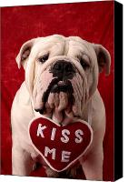 Hearts Photo Canvas Prints - English Bulldog Canvas Print by Garry Gay