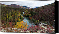 Wiseman Alaska Canvas Prints - Fall Colors - Marion Creek Canvas Print by Gary Rose