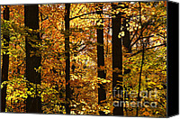 Forest Floor Canvas Prints - Fall forest Canvas Print by Elena Elisseeva
