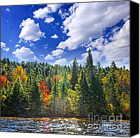 Sparkling Canvas Prints - Fall forest in sunshine Canvas Print by Elena Elisseeva