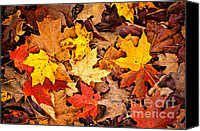 Forest Floor Canvas Prints - Fall leaves background Canvas Print by Elena Elisseeva