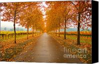 Northern California Canvas Prints - Fall Leaves Canvas Print by Mars Lasar