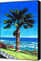 Tree Canvas Prints - Fan Palm - Diamond Head Canvas Print by Douglas Simonson