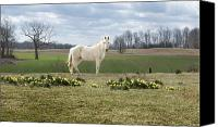 Horse Standing Canvas Prints - Field of Dreams Canvas Print by Steven  Michael
