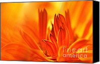 Botanicals Mixed Media Canvas Prints - Fire Storm  Canvas Print by Elaine Manley