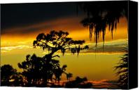 Pine Canvas Prints - Florida sunset Canvas Print by David Lee Thompson