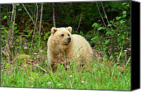 Kodiak Canvas Prints - Flower Girl Canvas Print by Dennis Blum
