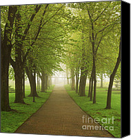 Foggy Canvas Prints - Foggy park Canvas Print by Elena Elisseeva