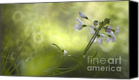 Flowers   Spider Canvas Prints - Forest meadow Canvas Print by Angel  Tarantella