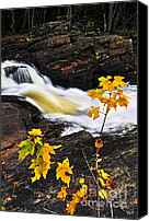 Forest Canvas Prints - Forest river in the fall Canvas Print by Elena Elisseeva