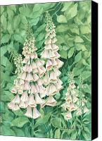 Shaped Painting Canvas Prints - Foxglove Canvas Print by Barbel Amos