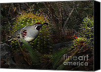 Quail Canvas Prints - Gambels Quail Canvas Print by Terril Heilman