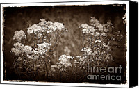 Judi Bagwell Canvas Prints - Going to Seed Canvas Print by Judi Bagwell