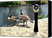 View Askew Canvas Prints - Goose On The Loose Canvas Print by Katherine Adams