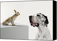 No Face Canvas Prints - Great Dane And Chihuahua Canvas Print by Michael Blann