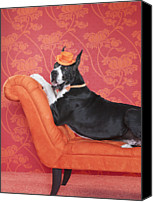 Great Dane Canvas Prints - Great Dane (canis Lupus Familiaris) On Couch Canvas Print by Catherine Ledner