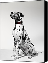 Great Dane Canvas Prints - Great Dane, Portrait Canvas Print by Michael Blann