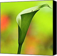 Tropical Plants Canvas Prints - Green Calla Lily Canvas Print by Heiko Koehrer-Wagner