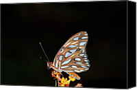 Gulf Coast States Canvas Prints - Gulf Fritillary Butterfly Canvas Print by Jim McKinley