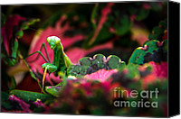 Insect Photography Canvas Prints - Here I Am Canvas Print by Robert Bales