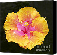 Blossom Canvas Prints - Hibiscus Canvas Print by Tony Cordoza