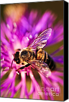 Weed Canvas Prints - Honey bee  Canvas Print by Elena Elisseeva