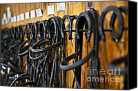 Horseback Canvas Prints - Horse bridles hanging in stable Canvas Print by Elena Elisseeva