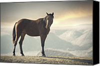 Horse Standing Canvas Prints - Horse In Wild Canvas Print by Arman Zhenikeyev - professional photographer from Kazakhstan