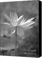 Lotus Blossoms Canvas Prints - I Love Lotus Canvas Print by Sabrina L Ryan
